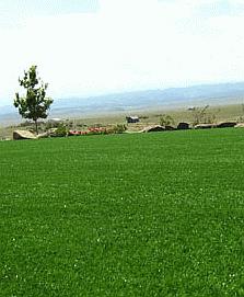 denver turfgrass