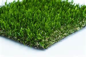 colorado turfgrass
